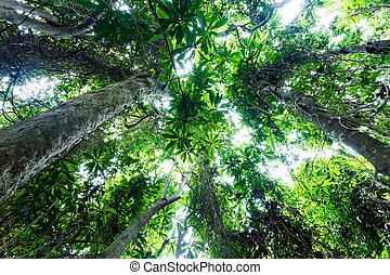 Tropical forest - Dynamic view on a tropical forest from...