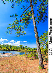 Green nature landscape with pine on a lake at Phukradung...