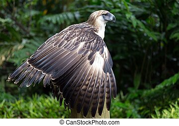 The Filipino eagle is a very rare and endangered species...