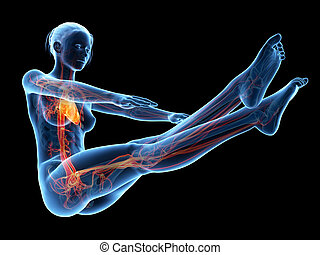 Workout - Woman working out - visible vascular system