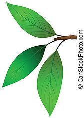 Three leaves on twigs