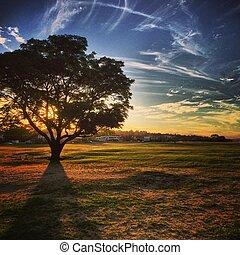 Dusk in Perth - The sun sets behind a tree at Point Walter...