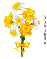 Daffodils. Beautiful spring flowers, isolated on white...