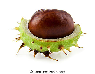 chestnut on a white background