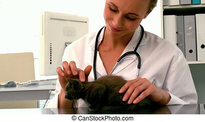 Vet examining a grey kitten in her office in slow motion