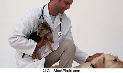Vet kneeling with two dogs - Vet kneeling with two dogs in...