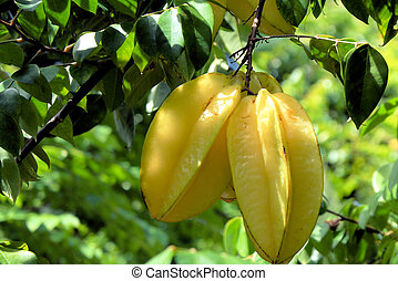 starfruit hanging from a tree