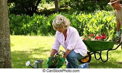 Retired couple gardening together at home in the garden
