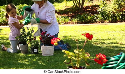 Grandmother gardening with her granddaughter at home in the...