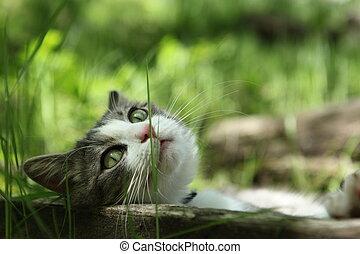 Cat - Cute cat