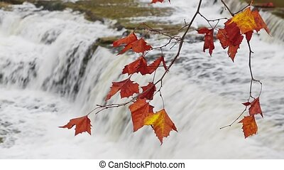 Waterfall Foliage Loop - Colorful fall leaves are backed by...