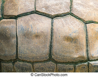 Turtle shell as background - Turtle shell texture to be used...