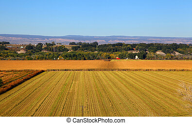 Wheat Fields - Harvested wheat fields areal view