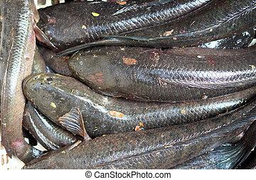 Fresh Catfish on the market