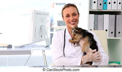Vet holding a yorkshire terrier in her office