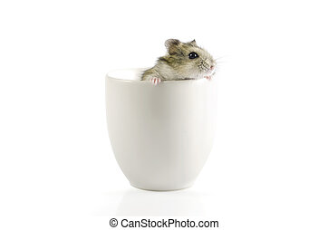 Little lovely hamster going out a cup : Clipping path...