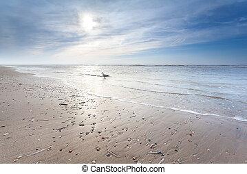 sunny sand beach in North sea, North Holland, Netherlands