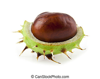 chestnut isolated on a white backgroundOne picture from...