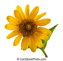 flowers are isolated on a white background. One picture from...