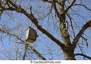 birdhouse - Birdhouse hanging from a tree branch.