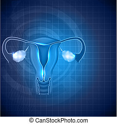 Female reproductive system background, uterus and ovaries -...
