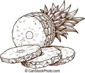 engraving pineapple slices on white - vector engraving...