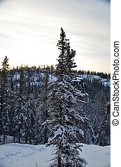 Boreal forest - Out in the Northern canadian Boreal forest