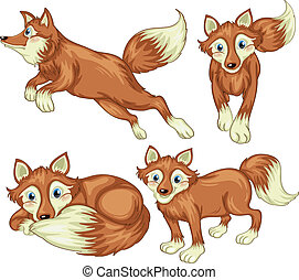 Four foxes - Illustration of the four foxes on a white...