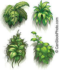 Leafy plants - Illustration of the leafy plants on a white...