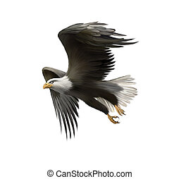 american bald eagle in flight isolated on white background