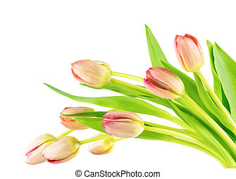 Spring tulips spray