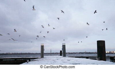 Winter berth - Snowy winter mooring and flying birds