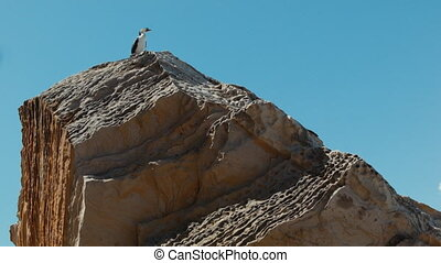 CORMORANT ON A ROCK - Two shot of Cormorant