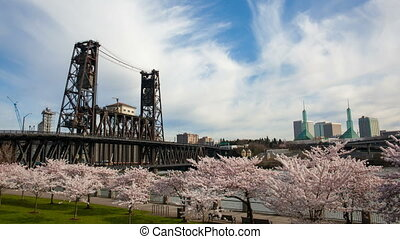 Flowering Cherry Blossom Trees Spring Season along...