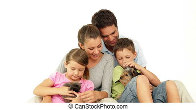 Cute family with a little grey kitten and yorkshire terrier...