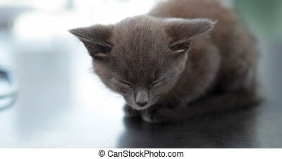 Little grey kitten - Adorable little grey kitten sitting on...