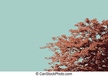 The Flame Trees vector - Delonix Regia or Flame Tree branch...