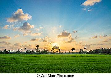Rice field green grass blue sky cloud cloudy landscape...