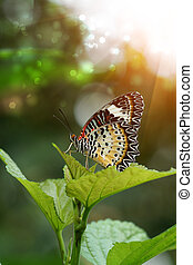Beautiful butterfly on a leaf