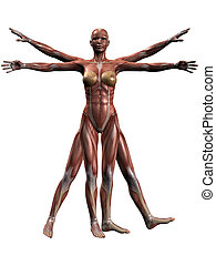 Female Human Body Anatomy - 3D Render of an Female Human...