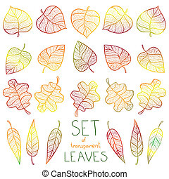 Collection colourful autumn leaves isolated - Collection...