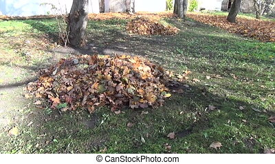 leaf pile autumn - dry leaf pile and continue to the house...