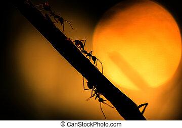 Siluetas, hormiga, luz del sol