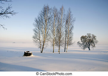 winter time morning landscape with birch tree