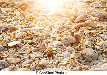 Background from sand and shells