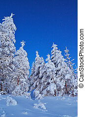 Twilight in the woods in winter - Winter landscape with snow...