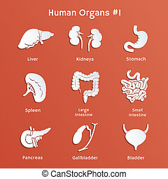 Set of paper icons with human internal organs - Vector paper...