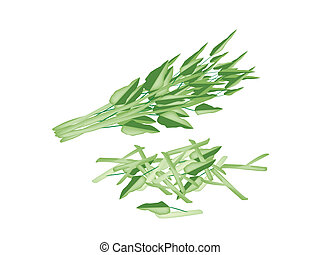 Fresh Water Spinach on A White Background - Vegetable and...