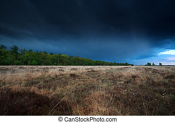 stormy sky over marsh with cottongrass, Drenthe, Netherlands