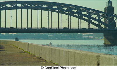 Grey seagull and Bolsheokhtinsky bridge at distance, Saint...
